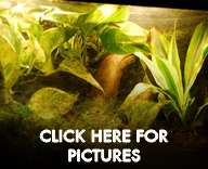 Living Vivarium Pictures