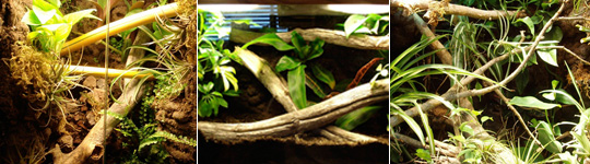 Tropical Living Vivariums by Bama Reptiles