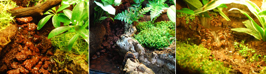 Living Vivarium Waterfalls
