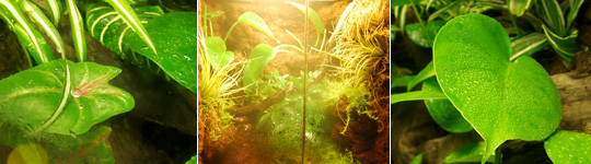 Tropical Living Vivarium Misting Systems