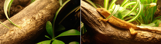 Tropical Wood for Living Vivariums