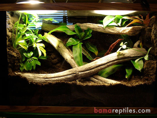 20 Gallon Tropical Living Vivarium with Plants and Wood