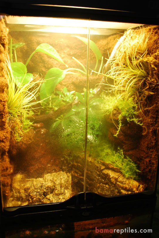 Custom Exo-Terra Tropical Vivarium Enclosure with extra Tropical plants and customized Waterfall with misting system