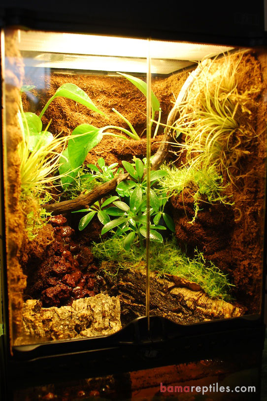 Custom Exo-Terra Tropical Vivarium Enclosure with extra Tropical plants and customized Waterfall